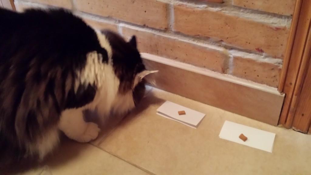 Wygrała pierwsza karteczka od lewej. Ale żeby nie było wątpliwości - Bąbel zjadł potem pozostałe przysmaki, uznając, że wszystkie prace stały na wysokim poziomie.
